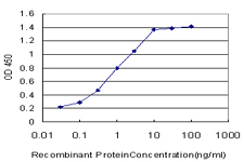 E - YAP1 Antibody (monoclonal) (M03) AT4557a
