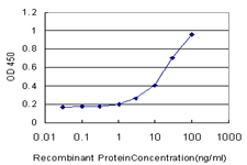 E - ZWILCH Antibody (monoclonal) (M01) AT4650a