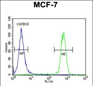 FC - CDC37 Antibody (Center) AP8965C