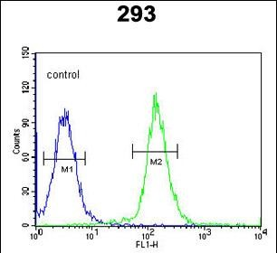 FC - CDC45L Antibody (Center) AP9881c