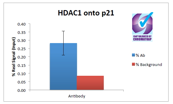 CHIP - Histone Deacetylase 1 Antibody (C-Term) AF2509a
