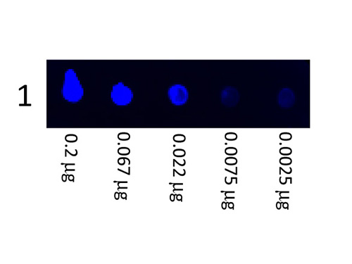 DB - Anti-Swine IgG (H&L)  (Fluorescein Conjugated) Secondary Antibody ASR1441