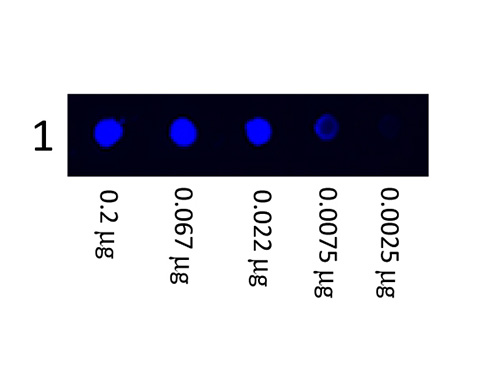 DB - Anti-Human IgG (H&L)  (Fluorescein Conjugated) Secondary Antibody ASR2694