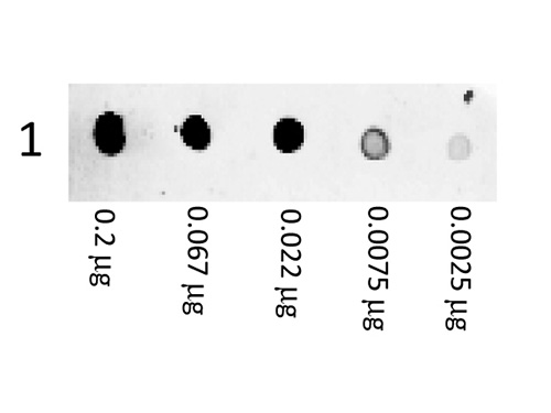 DB - Anti-Mouse IgG (H&L)  (Phycoerythrin Conjugated) Pre-Adsorbed Secondary Antibody ASR3094
