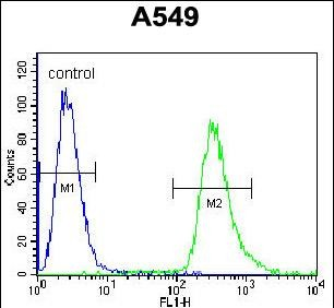 FC - HSP90B1 Antibody (Center) AW5268-U400