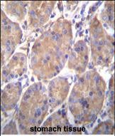 IHC-P - HSP90B1 Antibody (Center) AW5268-U400
