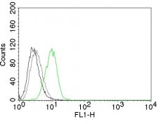 FC -  p27Kip1 (Mitotic Inhibitor/Suppressor Protein) Antibody - Without BSA and Azide AH10377