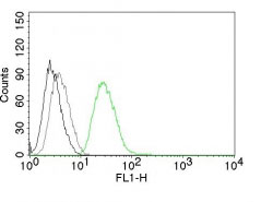 FC -  Ornithine Decarboxylase-1 (ODC-1) Antibody - Without BSA and Azide AH10642-100