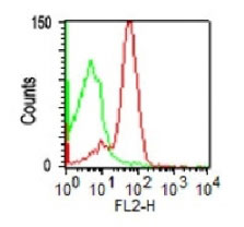 FC -  CD43 (T-Cell Marker) Antibody - Without BSA and Azide AH10743-100