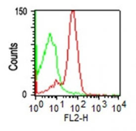 FC -  CD43 (T-Cell Marker) Antibody - With BSA and Azide AH10744-20