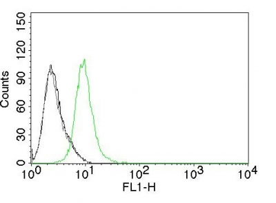 FC -  p27Kip1 (Mitotic Inhibitor/Suppressor Protein) Antibody - With BSA and Azide AH11007