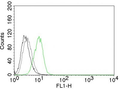 FC -  p27Kip1 (Mitotic Inhibitor/Suppressor Protein) Antibody AH11009-7