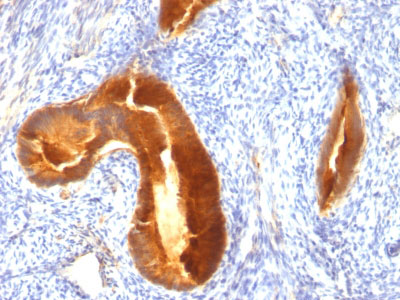 IHC -  MUC1 / EMA / CD227 (Epithelial Marker) Antibody - Without BSA and Azide AH11861