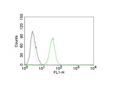 FC -  CD31 / PECAM-1 (Endothelial Cell Marker) Antibody AH12058