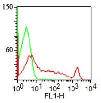 FC -  CDw75 (B-Cell Marker) Antibody - With BSA and Azide AH12304