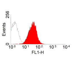 FC - Anti-Rat MHC Class I RT1Ac Antibody, clone OX-27  ABD11597