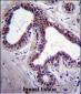 MAPK8 Antibody (C-term)