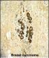 ERBB3  Antibody (N-term)