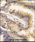 Bid Antibody (BH3 Domain Specific)