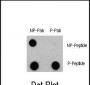 Phospho-LC3C(S12) Antibody