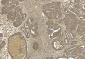 Beta-actin Antibody