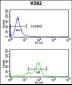 SNRPC Antibody (C-term)
