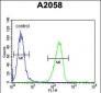 GSN Antibody (C-term)