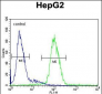 CP Antibody (N-term)