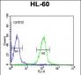 HLA-DRA Antibody (C-term)