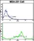 VCP Antibody (C-term)