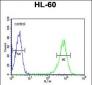 RPS8 Antibody (N-term)
