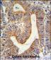 RPL17 Antibody (C-term)