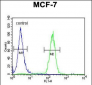 THOC7 Antibody (C-term)