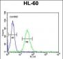 CD80 Antibody (C-term)