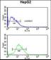 PARP16 Antibody (C-term)