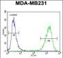 CF150 Antibody  (Center)