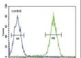 CD11b Antibody (N-term)