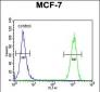 CCNT1 Antibody (Center)