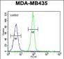 CASP3 Antibody (C-term)