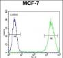 LGALS3 Antibody (C-term)
