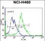GGH Antibody (C-term)