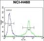 HLA-DQA1 Antibody (N-term)
