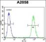 FGF11 Antibody (N-term)